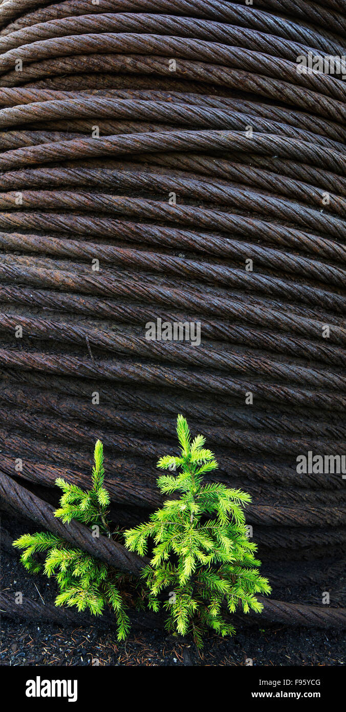 Coil of steel and spruce trees, Brazeau Colleries, Nordegg, Alberta, Canada - Stock Image