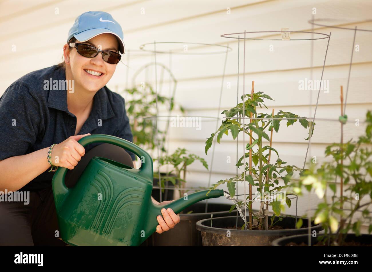 Woman watering tomatoe plants  Model Released - Stock Image
