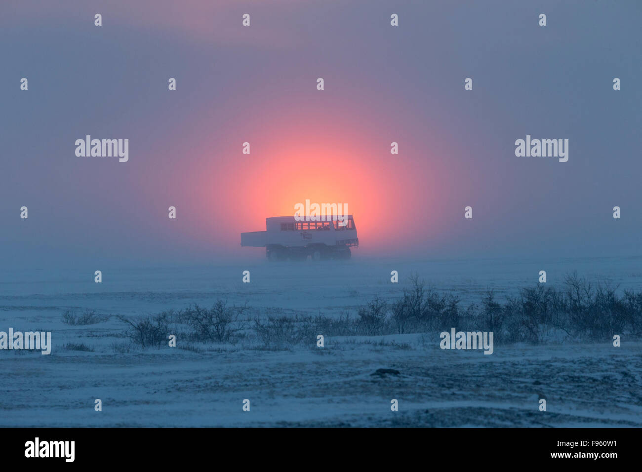 Tundra buggy with passengers looking for polar bears at sunset, Cape Churchill, Wapusk National Park, Manitoba. - Stock Image