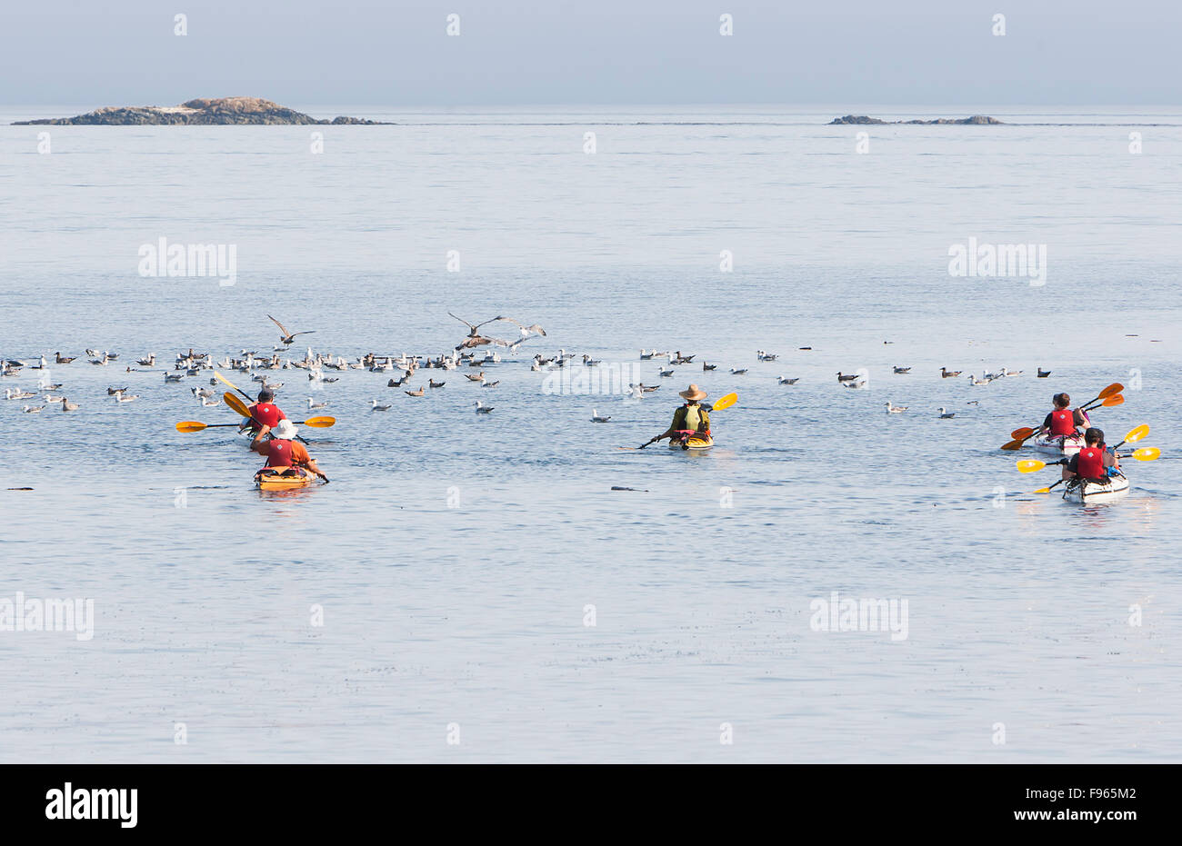 Kayakers head out of Telegraph Cove for a day's paddle on the waters of Johnstone Strait. - Stock Image