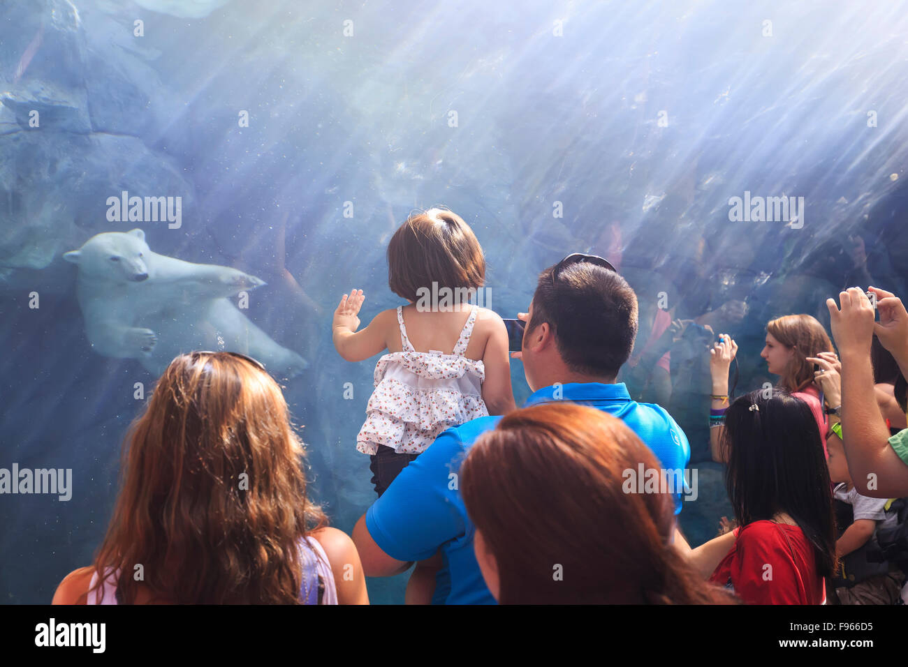 People watching a polar bear swimming underwater at the Journey to Churchill, Assiniboine Park Zoo, Winnipeg, Manitoba, - Stock Image
