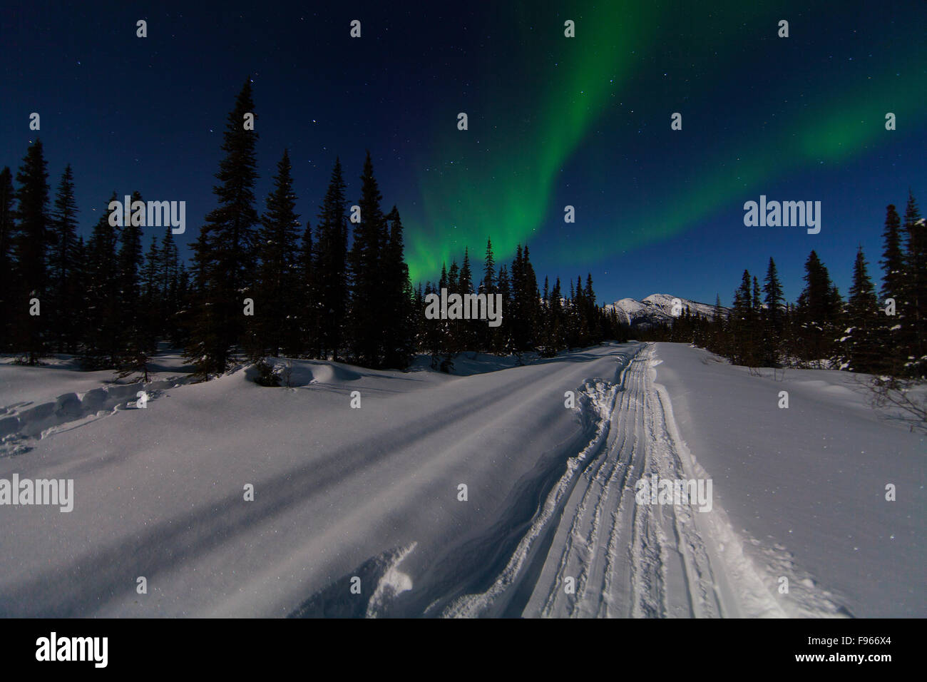 A snowmobile trail at night contrasts against the Northern Lights (Aurora Borealis) dancing in a northern sky along - Stock Image