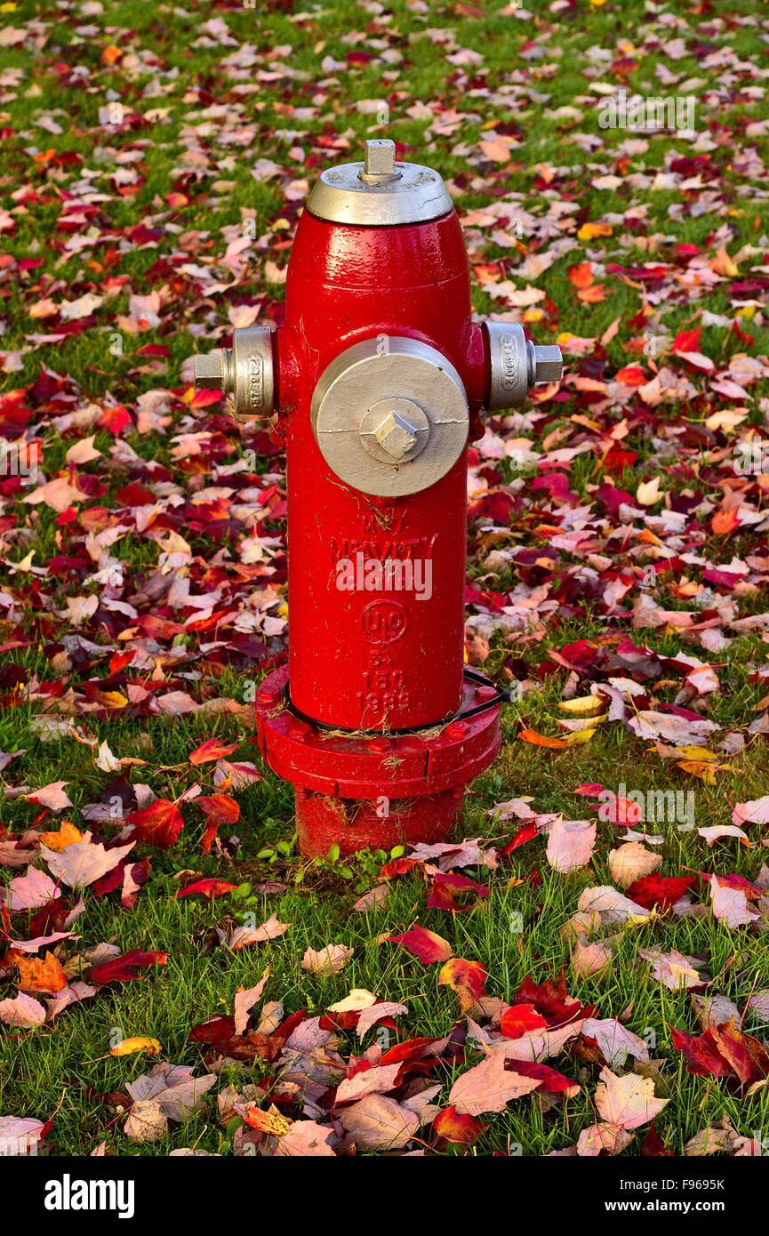 A red fire hydrant on a grass area covered with fallen maple tree leaves in Sussex New Brunswick Canada. - Stock Image