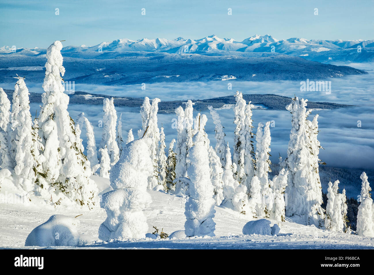 Snowcovered trees on Silver Star Mountain, Monashee Mountains in the distance, British Columbia, Canada - Stock Image