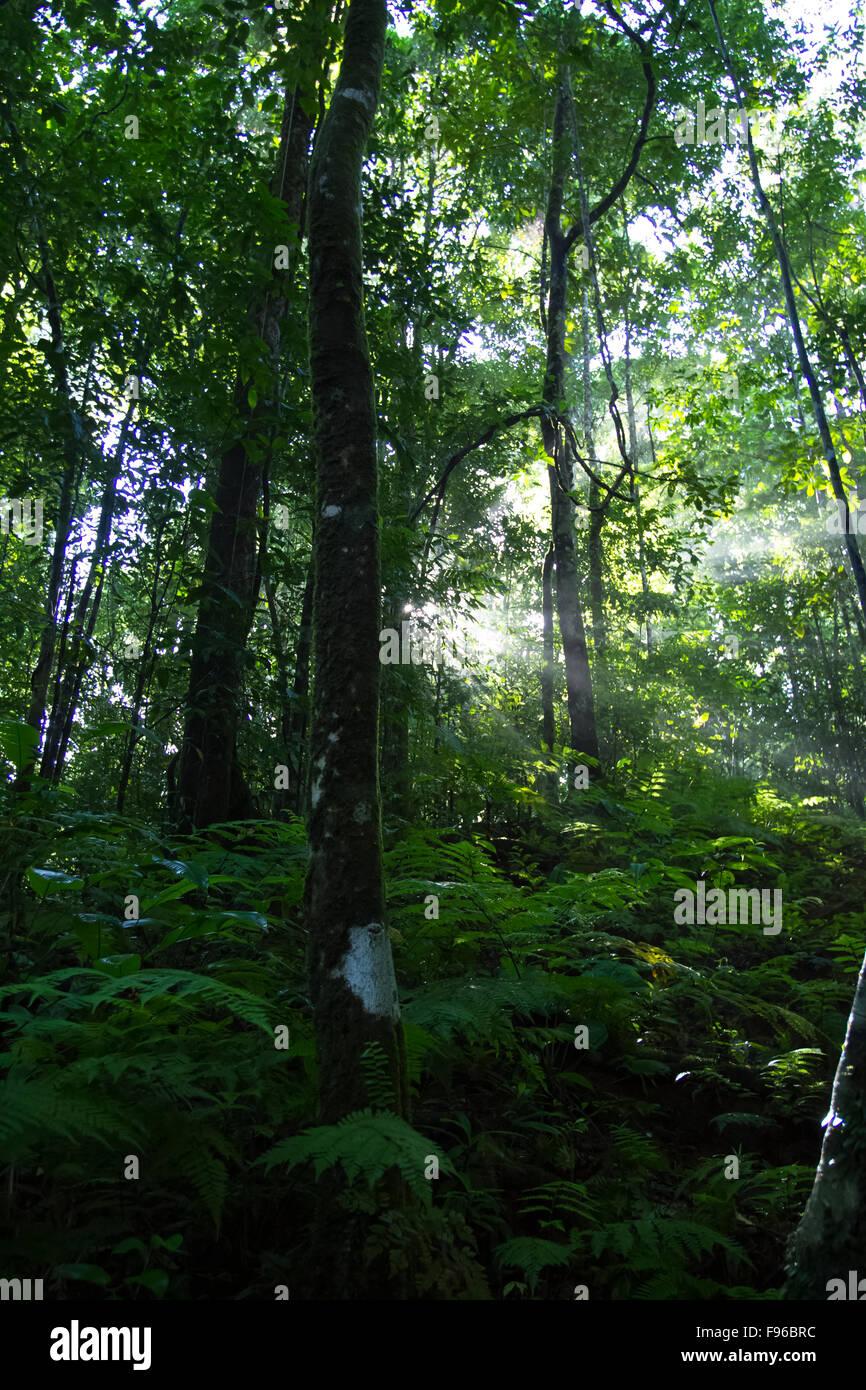Rainforest, Osa peninsula, Costa Rica - Stock Image