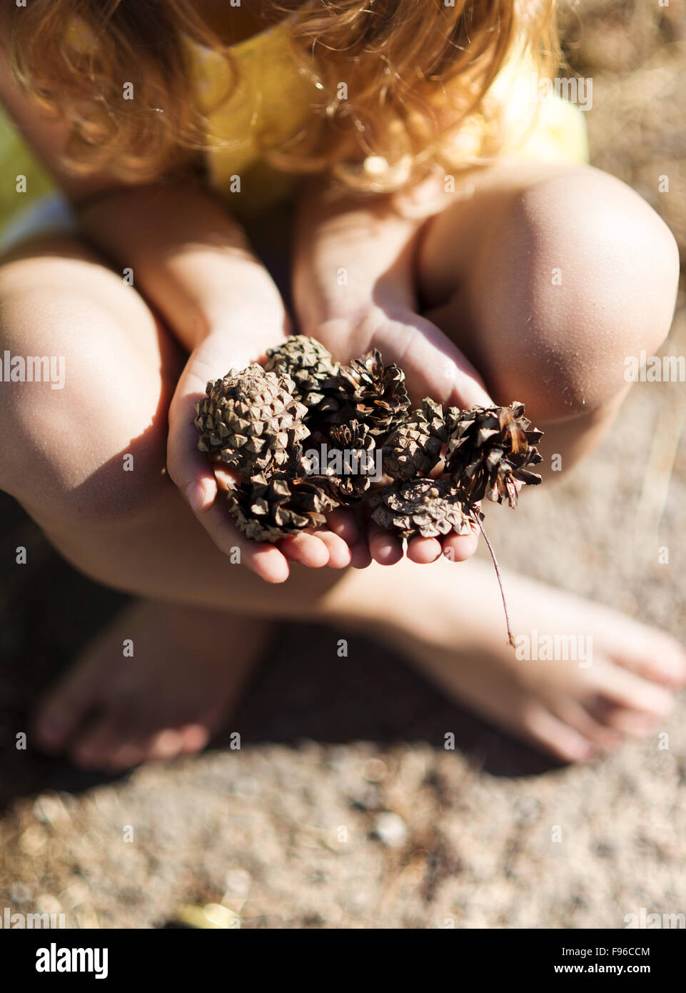 Close up of little girl's hands holding pine cones - Stock Image