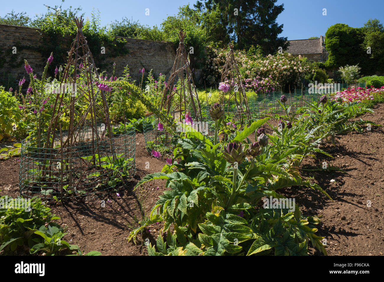 Foxgloves and sweet williams, growing beside artichokes and willow cane teepee's within the vegetable garden - Stock Image