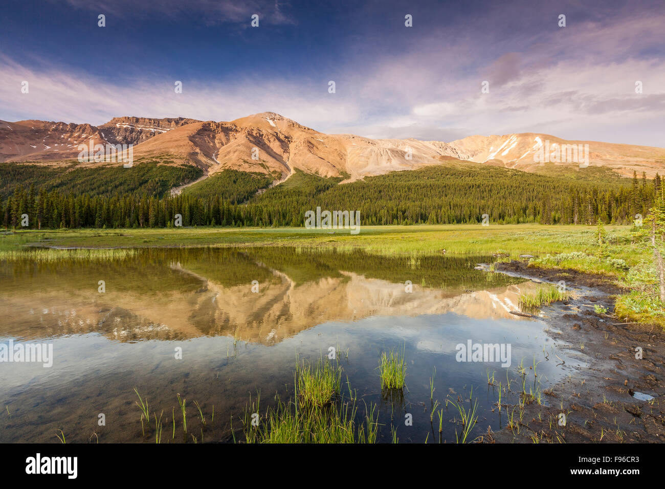Observation Peak reflected in wetlands in Banff National Park, Alberta, Canada - Stock Image