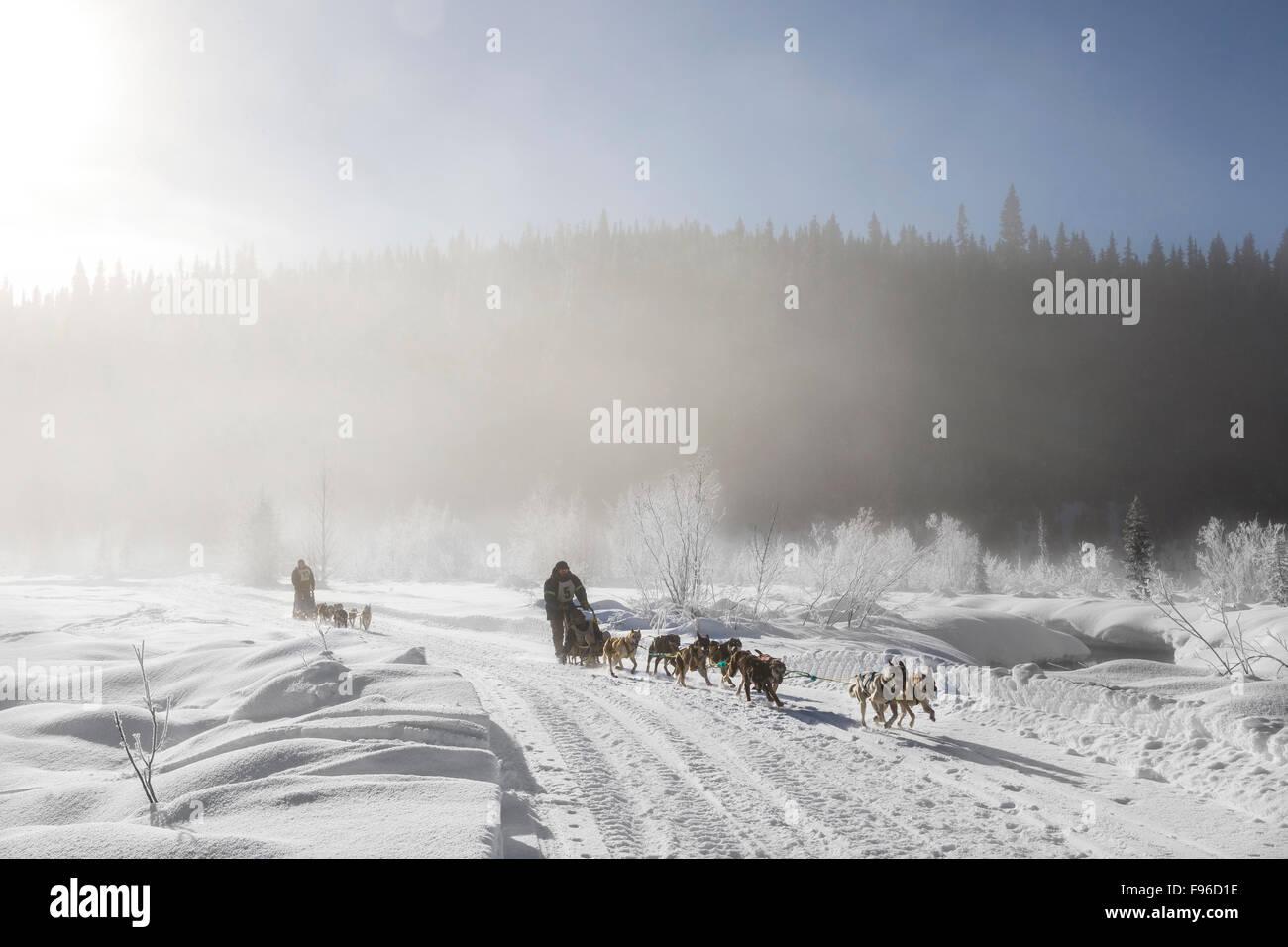 British Columbia, Canada, Gold Rush Dog Sled Mail Run, Barkervilel Area, North Cariboo region, mushers, dod sledding, - Stock Image