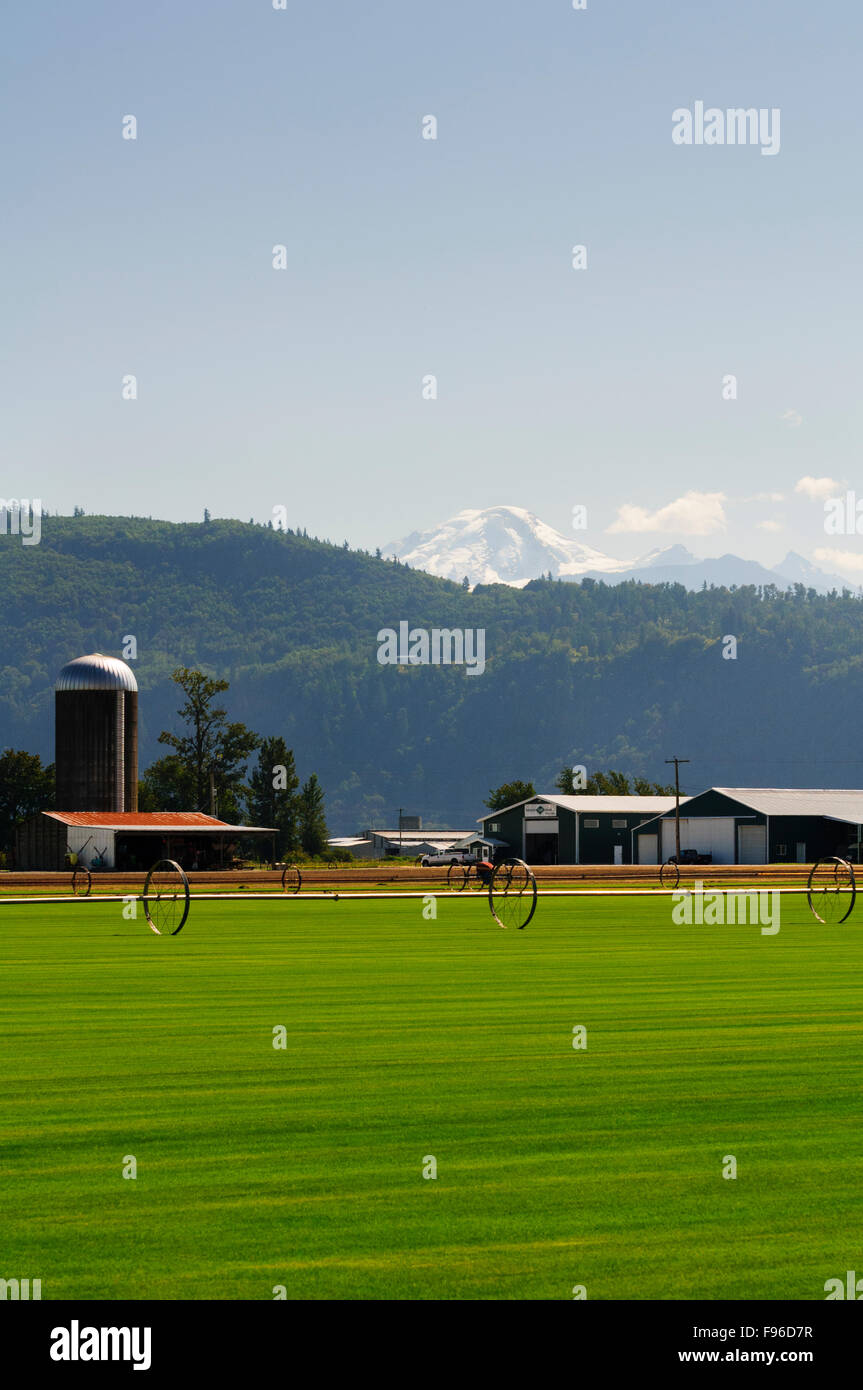 A turf farm in Sumas, Washington State.  Mt. Baker is in the background. - Stock Image