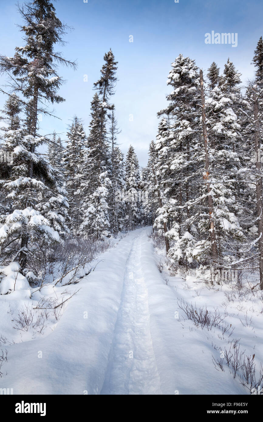 Winter and the Spruce Bog Boardwalk trail in Algonquin Provincial Park, Ontario, Canada - Stock Image