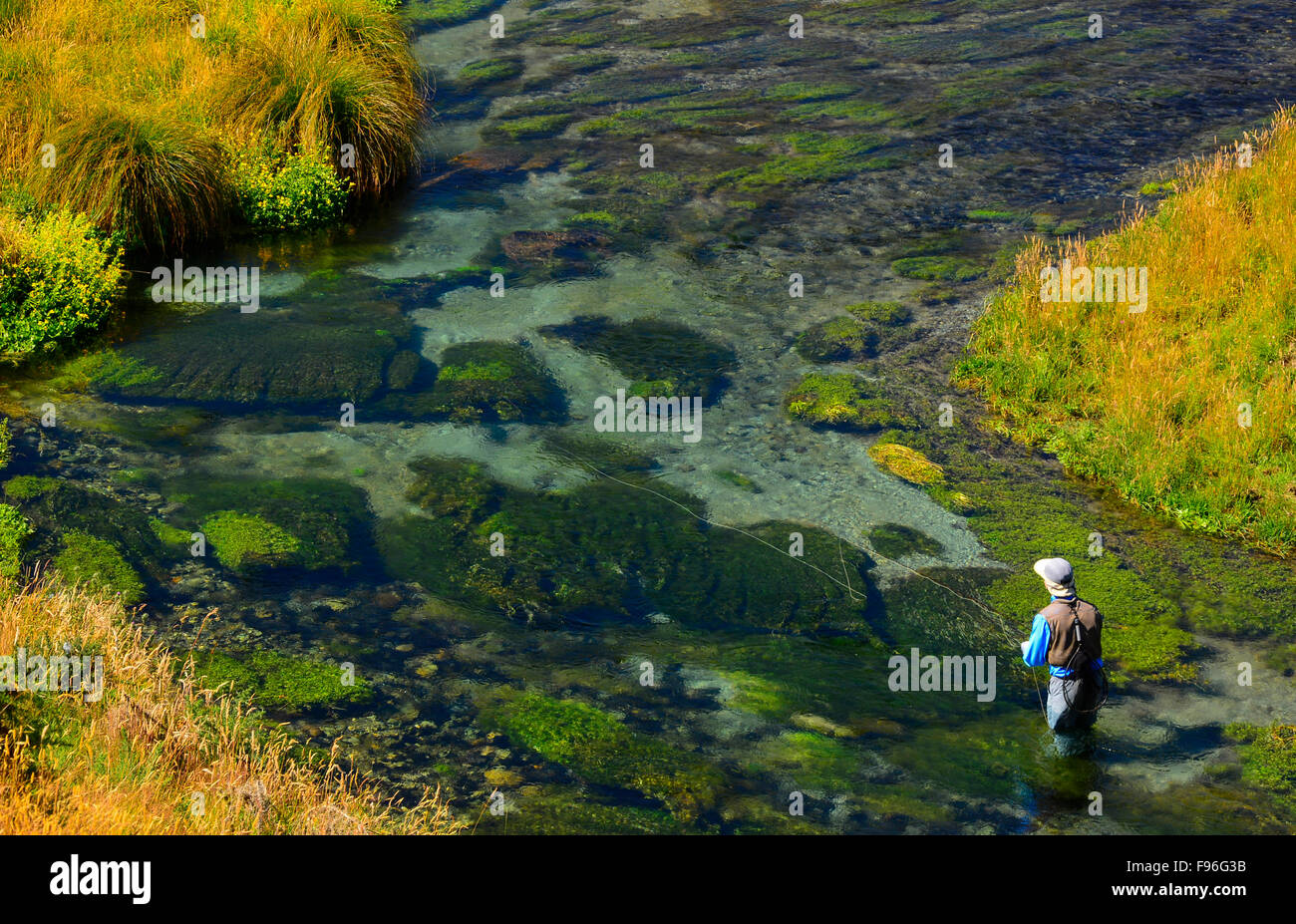 Man fly fishing in a river in New Zealand, Spring Creek - Stock Image
