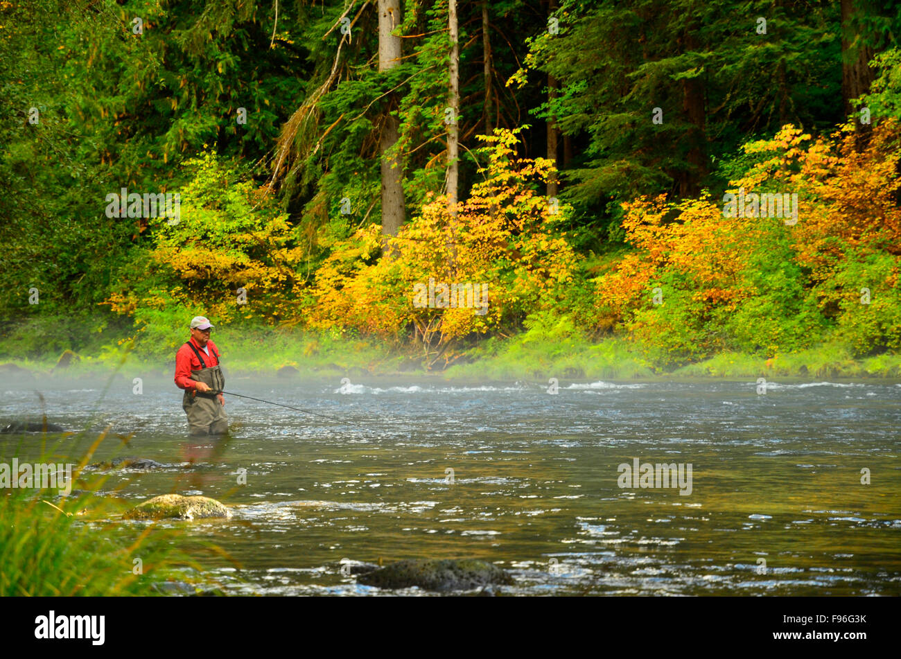 Steelhead Fishing, Umqua River, Oregon, USA - Stock Image