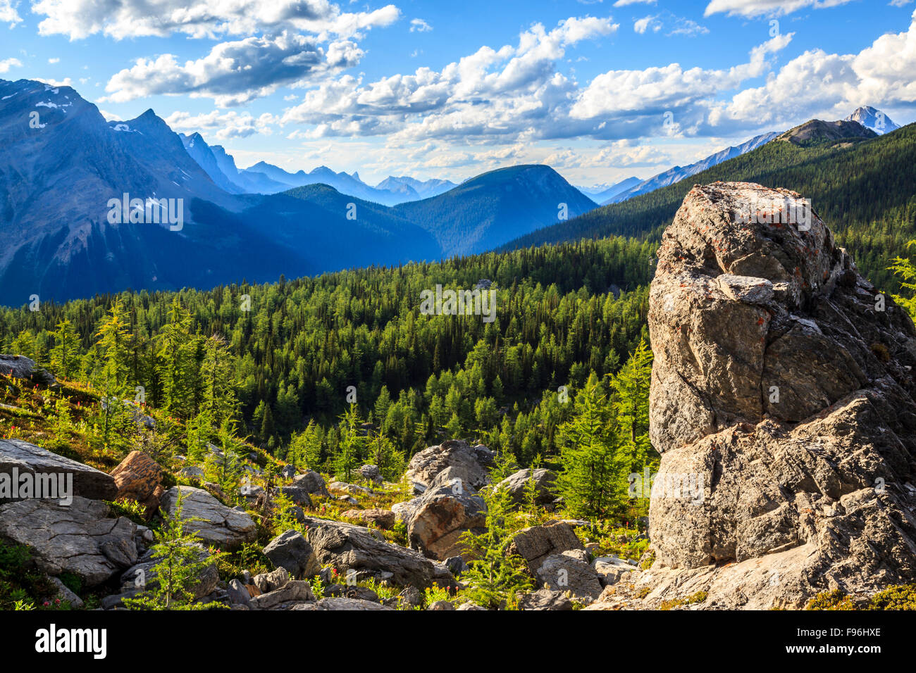 The view from Goodsir Pass over the larch forest near the boundary of Kootenay and Yoho National Parks. Kootenay - Stock Image