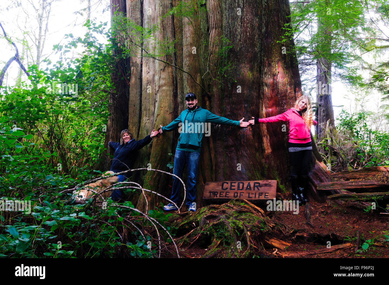 Three people join hands around the base of an old growth cedar tree on Meares Island near Tofino, British Columbia, - Stock Image