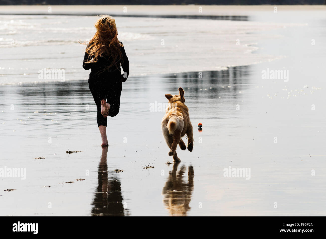 A young woman and her Golden Retriever running after a ball while on Chesterman Beach in Tofino, British Columbia. Stock Photo