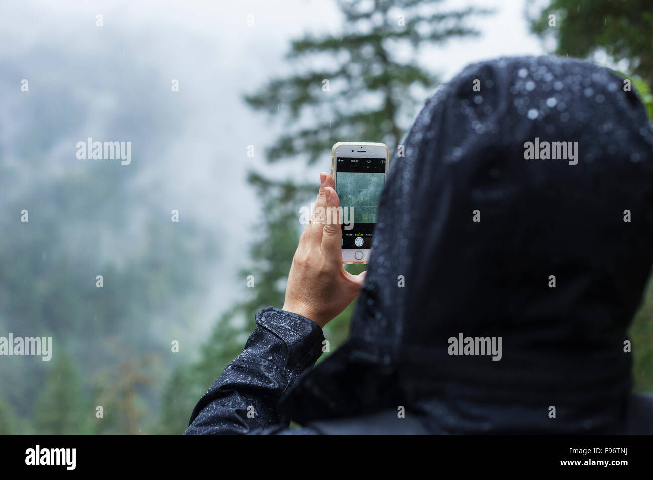 Woman taking photograph in the rain, BC, Canada - Stock Image