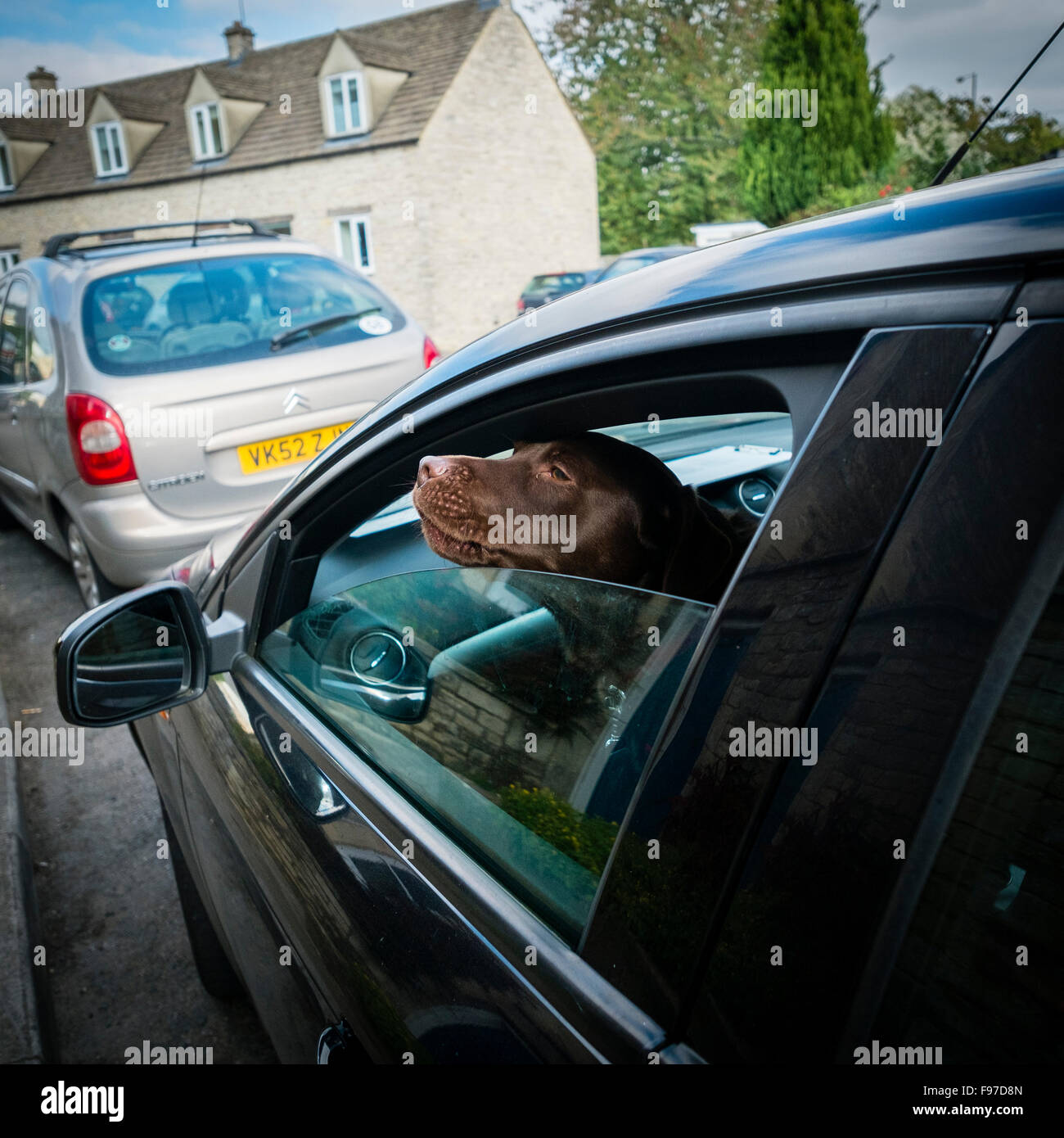 The head of a red setter dog poking out of the open window of a parked car on a summer afternoon Cirencester, Gloucestershire, - Stock Image
