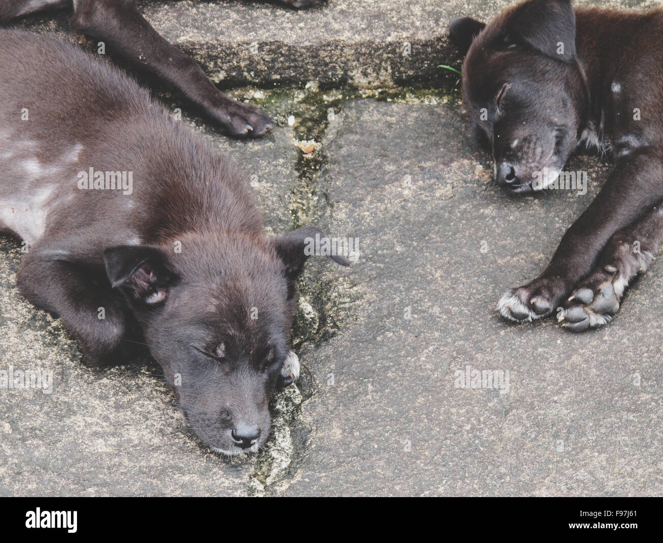 Two Puppies Sleeping - Stock Image