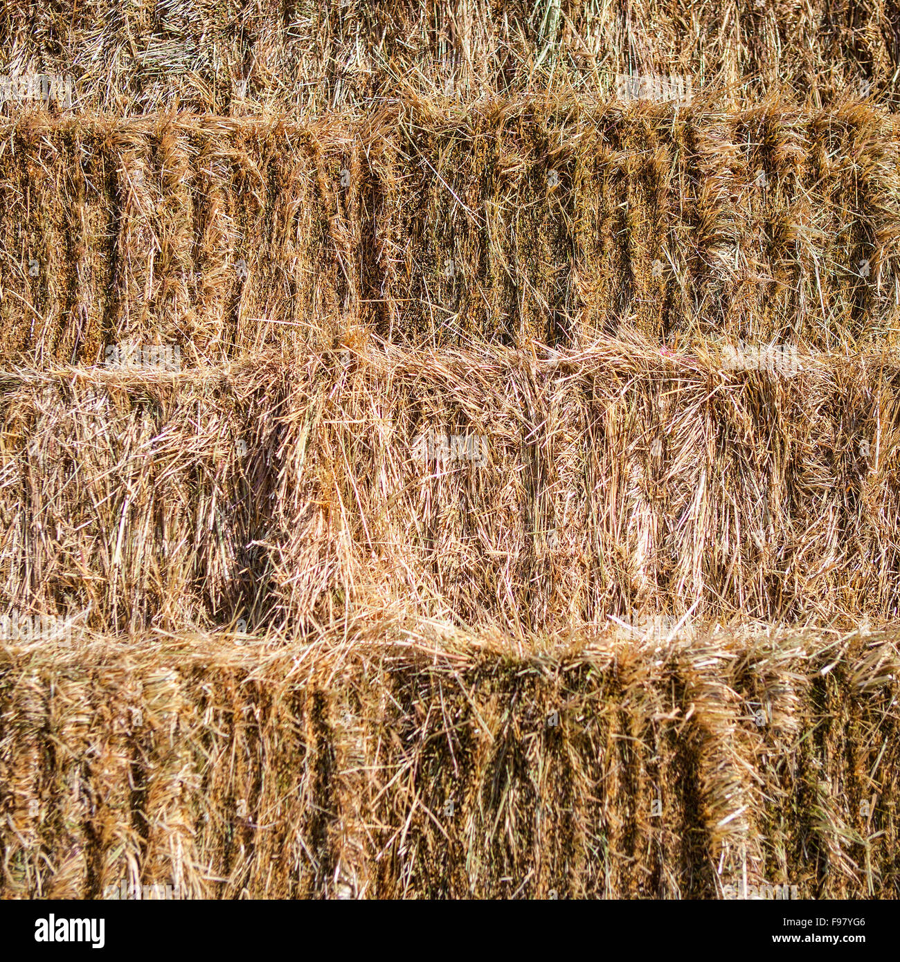 Fresh hay bales stacked for background - Stock Image