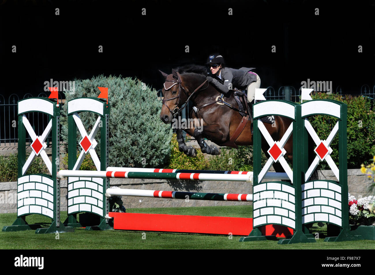 Horse show jumping, equestrian sports, sport horse, warm-blood, Jumper Ring - Stock Image