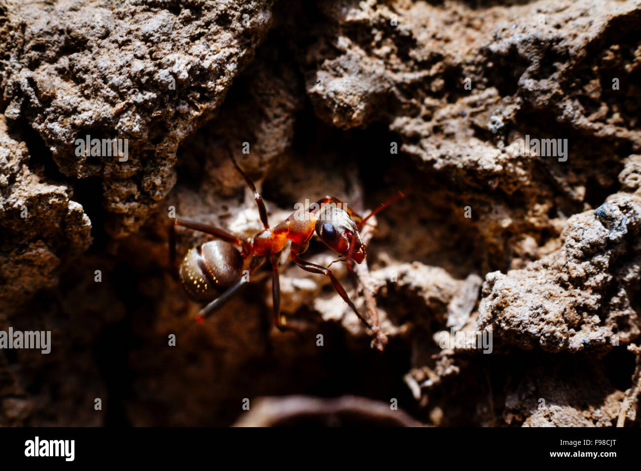 Close up of an ant on the ground. - Stock Image