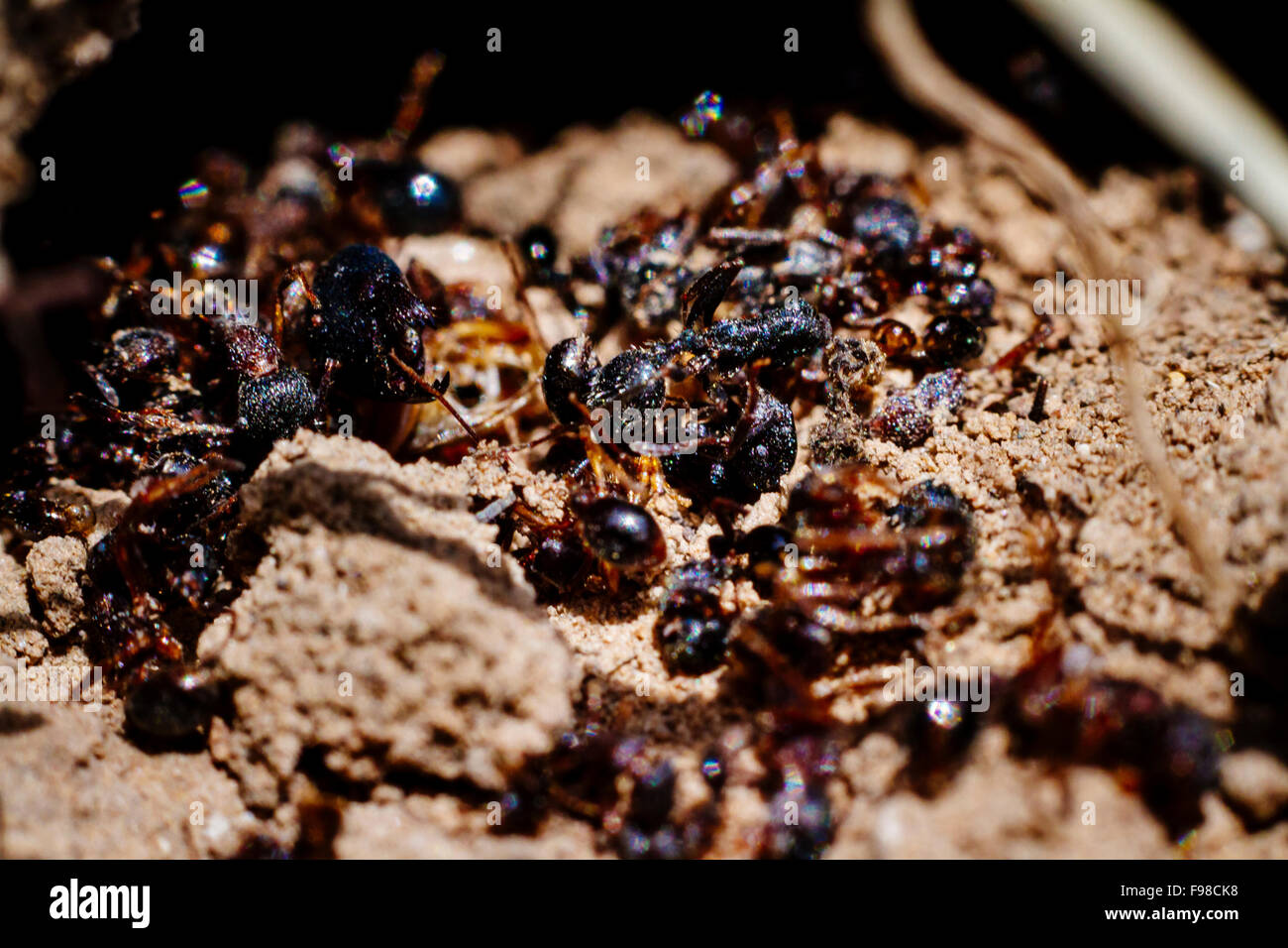 The view of many dead ants on the ground. - Stock Image