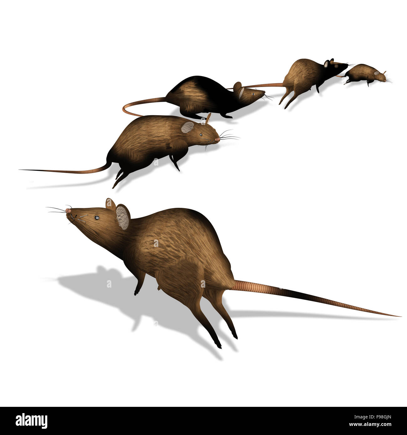 rats escape - Stock Image