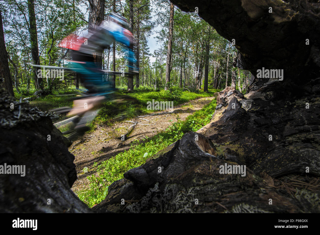 Mountain biker races by on the trails of northern Sweden. - Stock Image