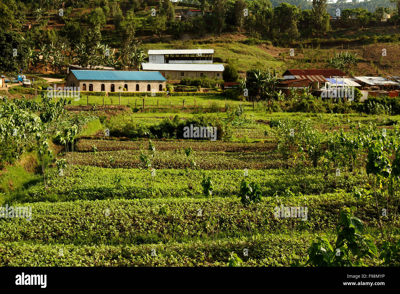An example of African agriculture in Kibuye, Rwanda - Stock Image