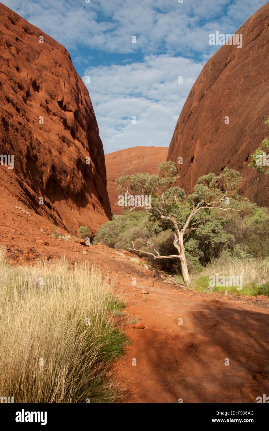 Hiking trail through Kata Tjuta (also known as 'The Olgas') in Uluru-Kata Tjuta National Park in Australia's - Stock Image