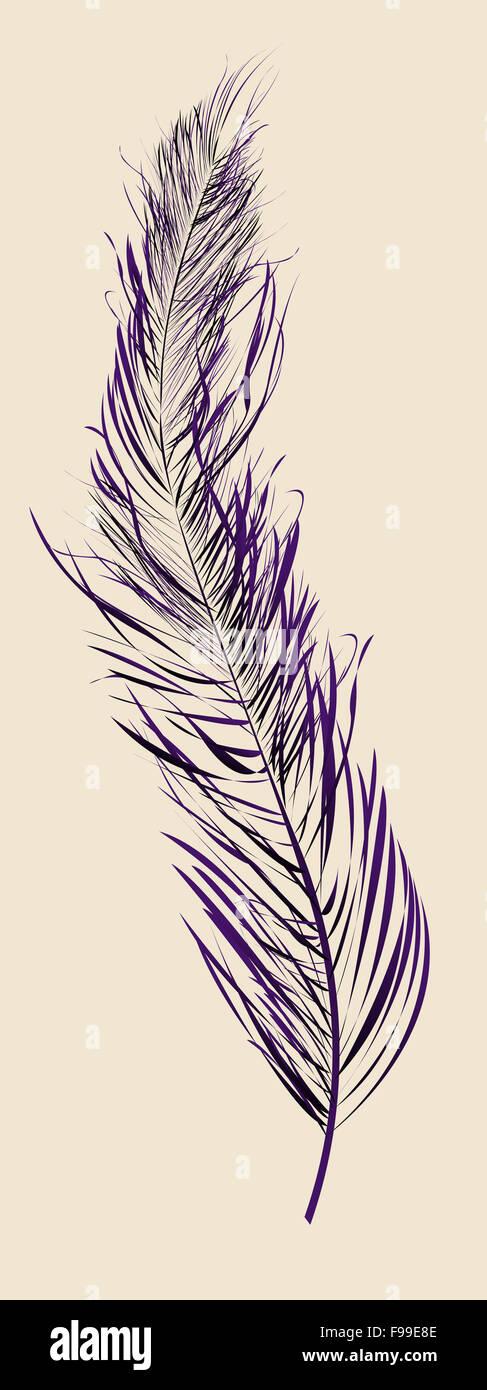 Purple feather - Stock Image