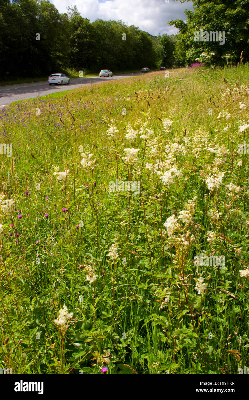 Meadowsweet (Filipendula ulmaria) and other wildflowers on a road verge. A470 near Llanidloes, Powys, Wales, July. - Stock Image