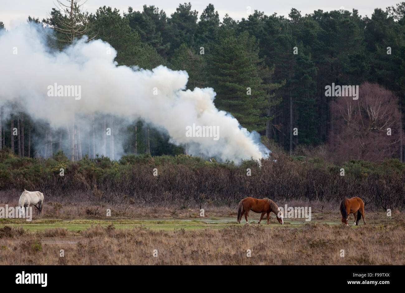 Smoke from Controlled Burning in The New Forest used to manage the forest - Stock Image
