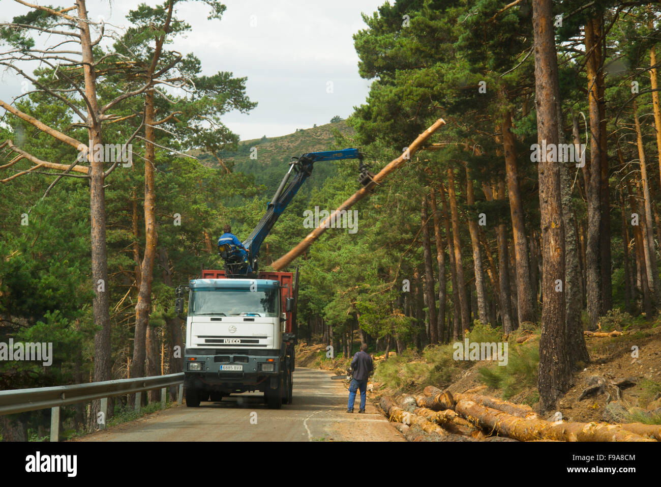 Timber industry. Navafria Mountain Pass, Madrid province, Spain. - Stock Image