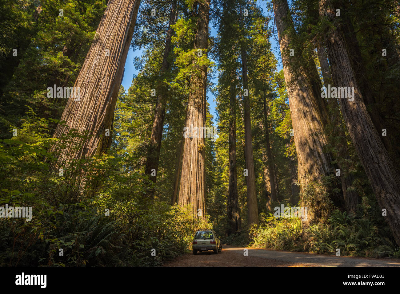 Holland Hill Rd, Jedediah Smith Redwoods Stock Photo