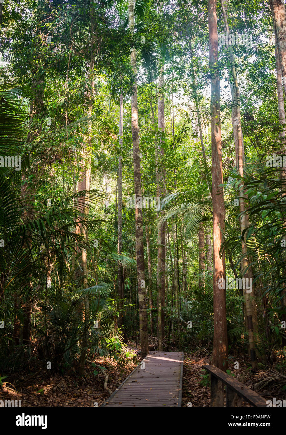 Wooden planks, jungle path, Kuala Tahan, Taman Negara, Malaysia - Stock Image