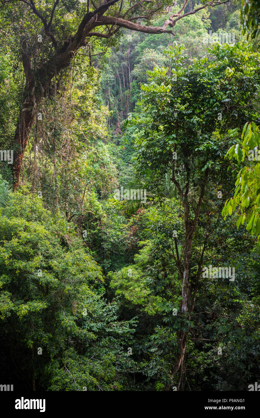 Thicket, trees, jungle, Kuala Tahan, Taman Negara, Malaysia Stock Photo