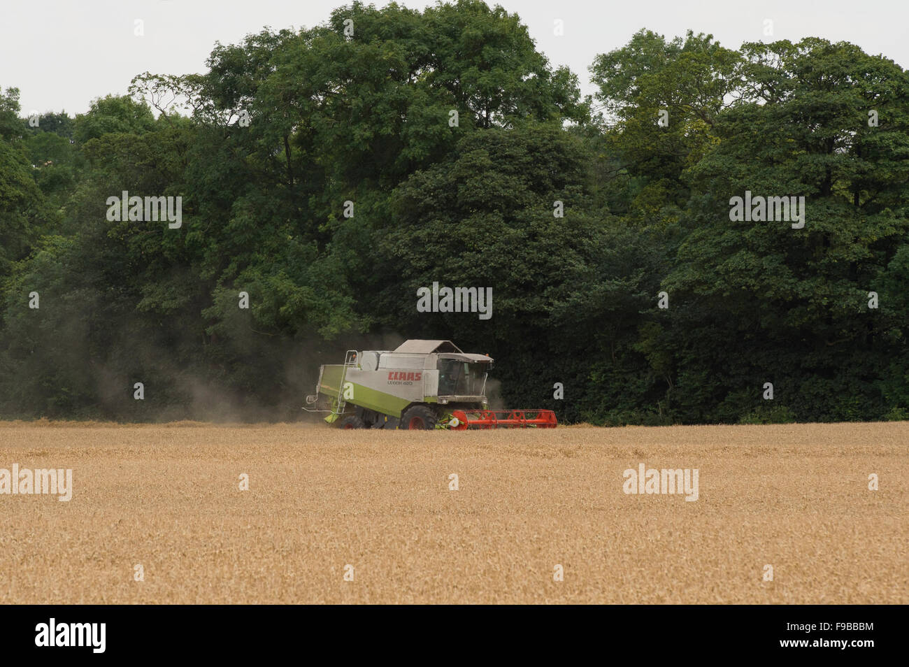 Summer farm work  - an agricultural machine (Claas combine harvester) is working in a dusty wheat field at harvest - Stock Image