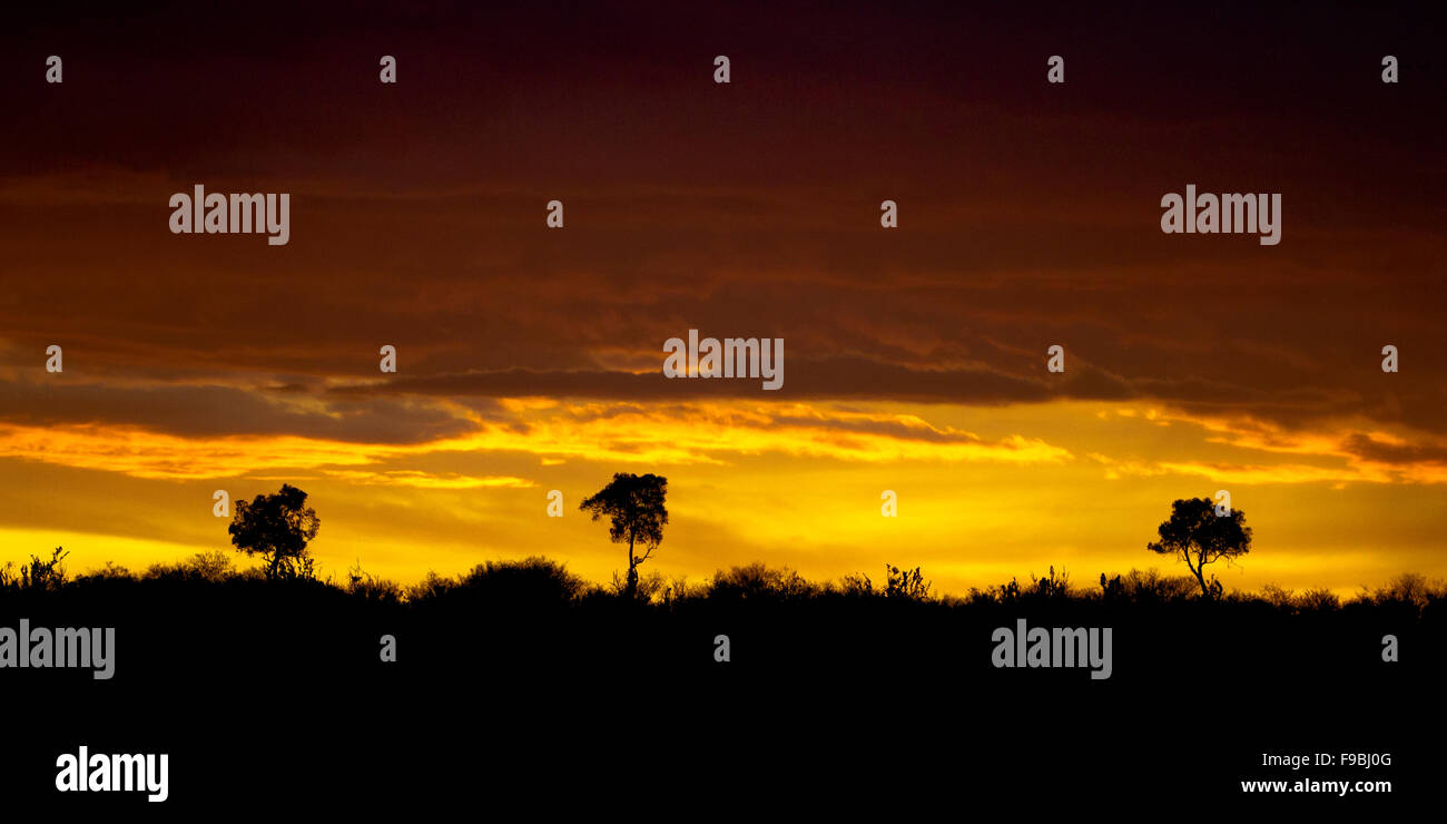 3 Trees in an African Sunset - Stock Image