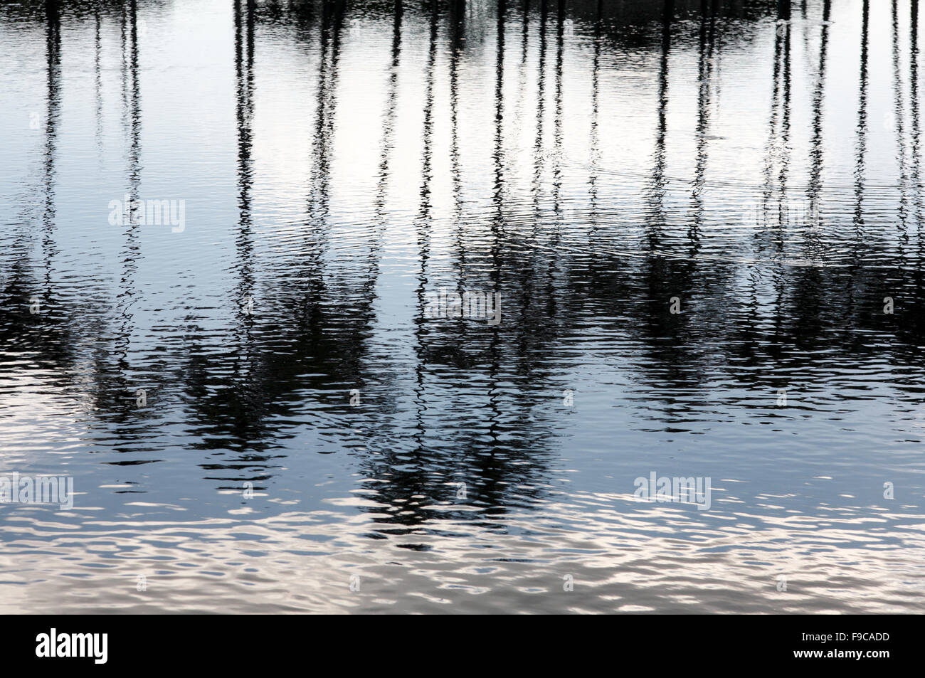 Palm trees reflection on water. - Stock Image