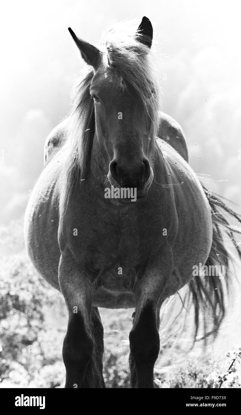 Horse with flies Stock Photo