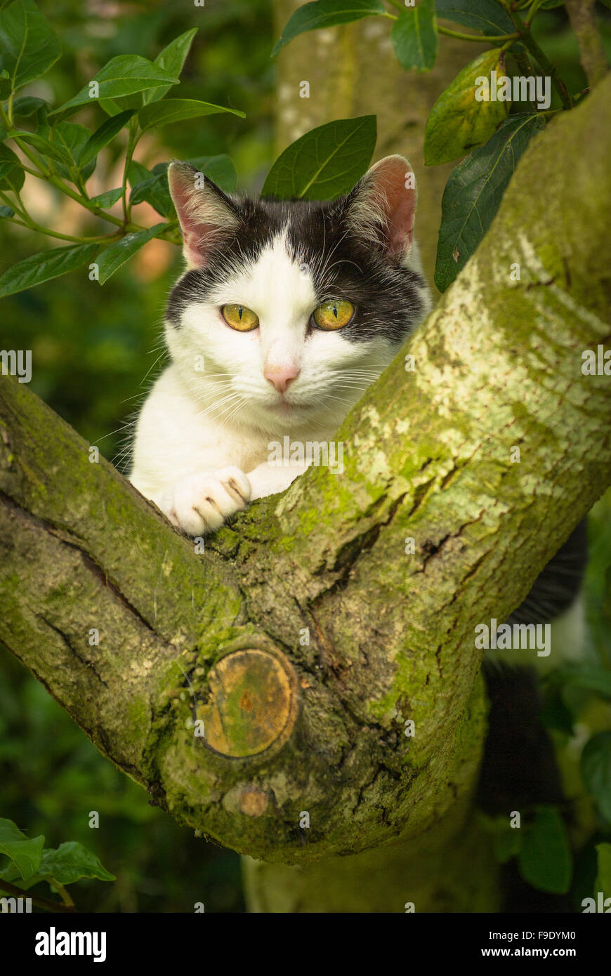 Country cat stalking wildlife from the sanctuary of a tree - Stock Image