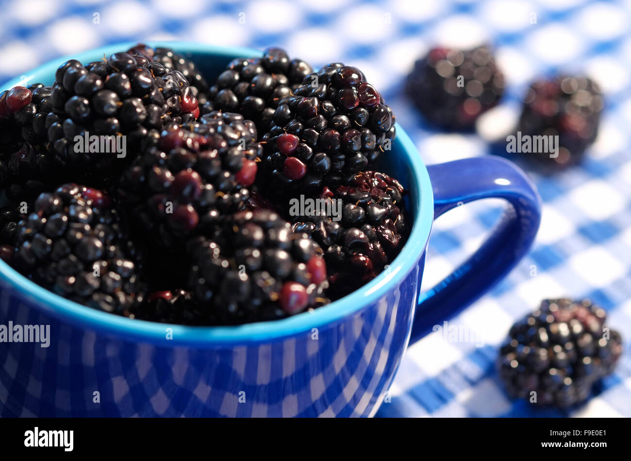 blackberries in blue cup on gingham table cloth - Stock Image