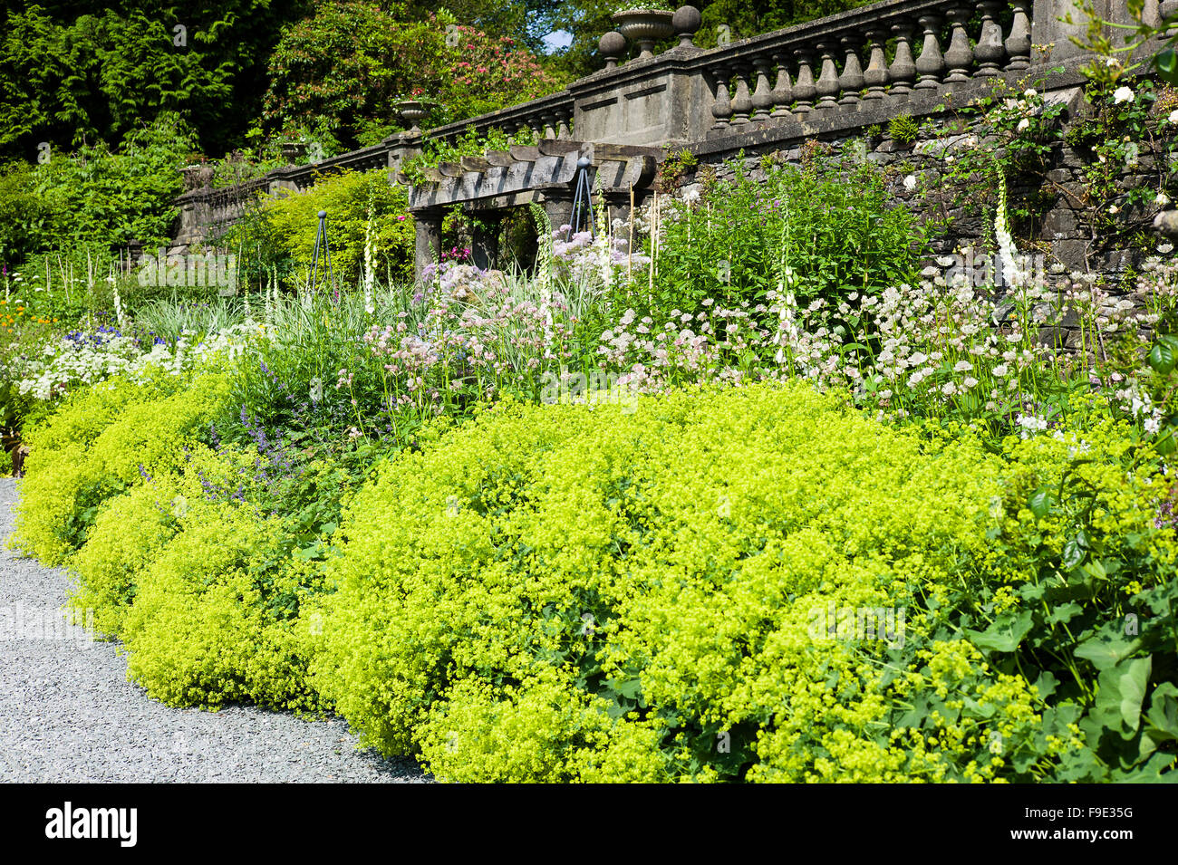 Magnificent stately home herbaceous border with Alchemilla Mollis in the foreground at Rydal Hall Cumbria - Stock Image