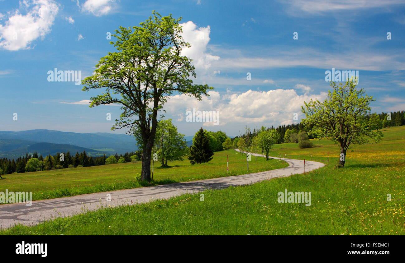 Bohemian Forest, Czech Republic - Stock Image