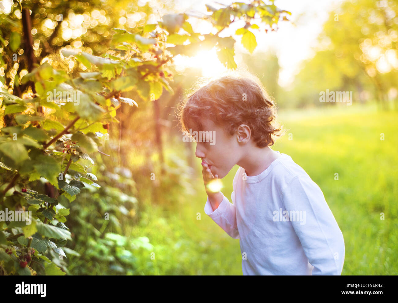 Cute little boy picking berries outside in a sunny garden - Stock Image