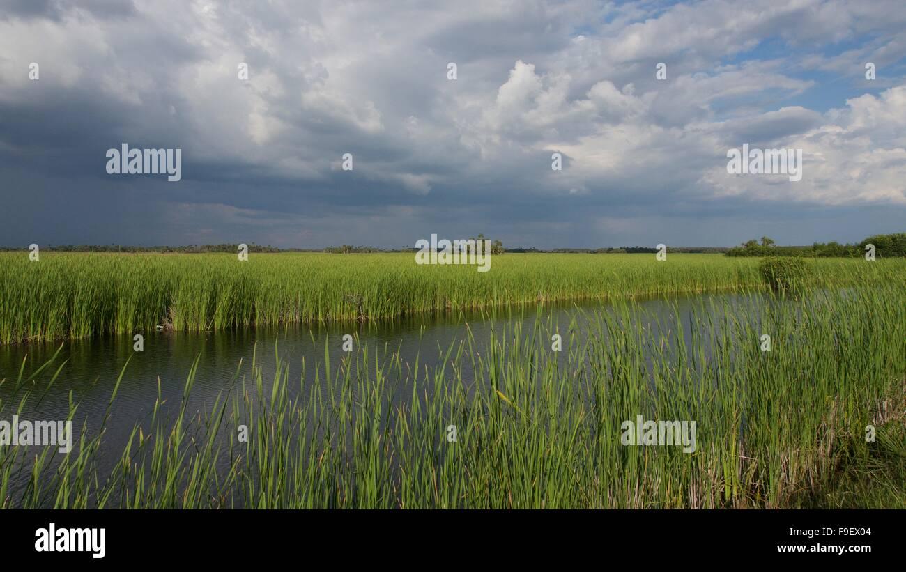 Sawgrass Field - Stock Image