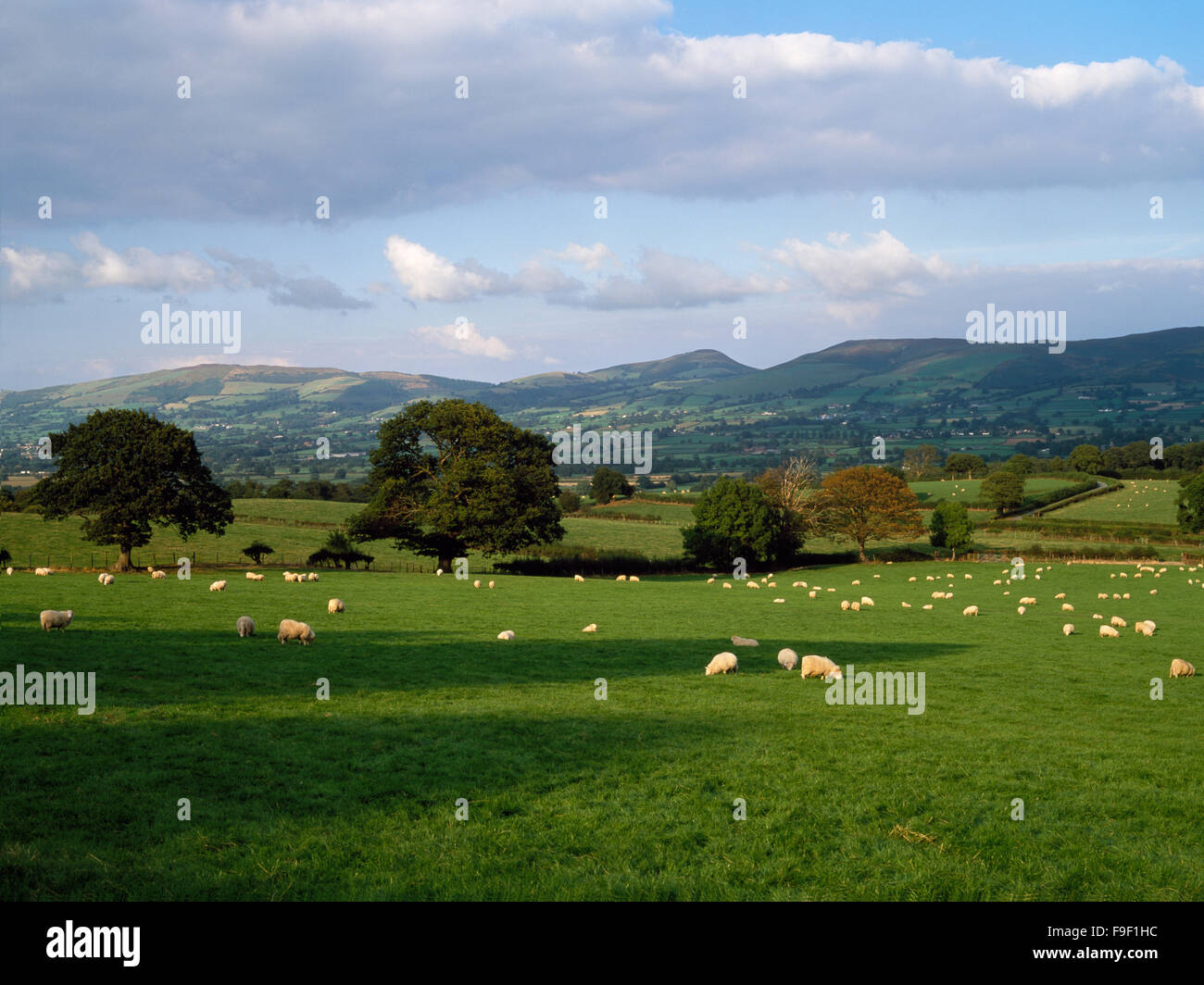 The Clwydian Hills from near Rhewl, in the Vale of Clwyd, with Moel Arthur centre, and Penycloddiau on left, from - Stock Image