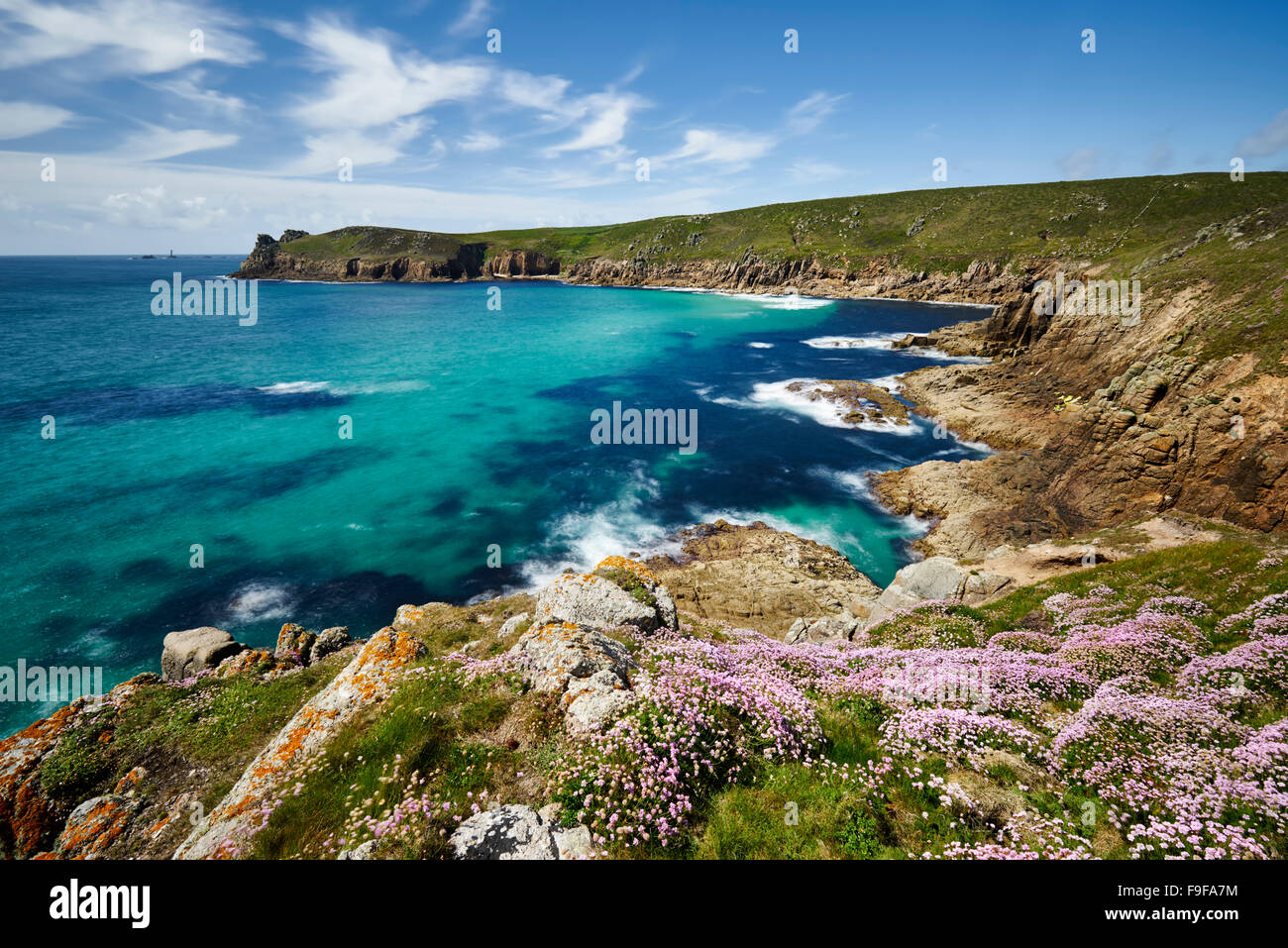 Sea Thrift growing on the clifftop at Nanjizal, Cornwall - Stock Image